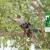 Brooksby Tree Care LLC