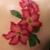 Bulletproof Tattoo