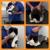 Lanz Pet Care LLC Mobile Grooming