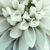Sweet Arrangements Florist