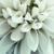 Hauke's Floral N' More