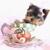 TeaCups, Puppies & Boutique