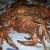 Doc's Crabs