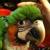 Green Parrot Superstore