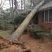 Jason's Tree & Timber