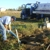 Pop-A-Lid Septic & Grease Trap Services