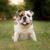 Best Buddy Dog Trainer
