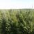 Bengtson Christmas Tree Farm