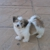 Tony Happy Puppies