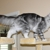 EuroCoons Maine Coon Cattery