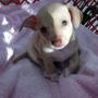 Pet Care Center Inc