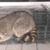 Best Wildlife Removal & Repairs, Inc