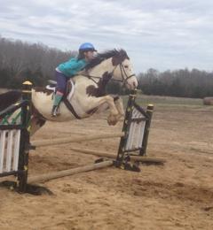 Davidson equestrian - Ash Flat, AR