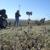 Waage Surveying, Inc.