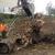 Stump's Tree Service