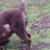 Dapper Dogs