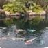 Laguna Koi Ponds
