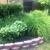Basic Tree Care