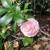 Huntington Rose Gdn Tea Room