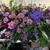 Plant Magic Florist