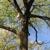 Coffey &Son Tree & Landscaping,Inc.