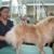 Best Friends Pet Care
