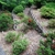RootWise Landscape Solutions, LLC