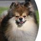 Elite Canine - San Ramon, CA