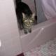 Amshel's Home Pet Sitting Service, LLC