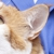 Lake Hills Veterinary Clinic LLC