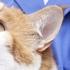 Clemson Animal Hospital LLC