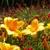 Dallas Arboretum & Botanical