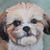 Animal Art and Pet Portraits by Stephanie Grimes