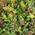 Square Root Garden Design, LLC