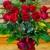 Joy Flower Shop