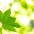 Arborilogical Services Inc