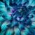 Wyoming Stuyvesant Floral