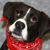 Kentucky Humane Society adoptions at St Matthews Feeders Supply
