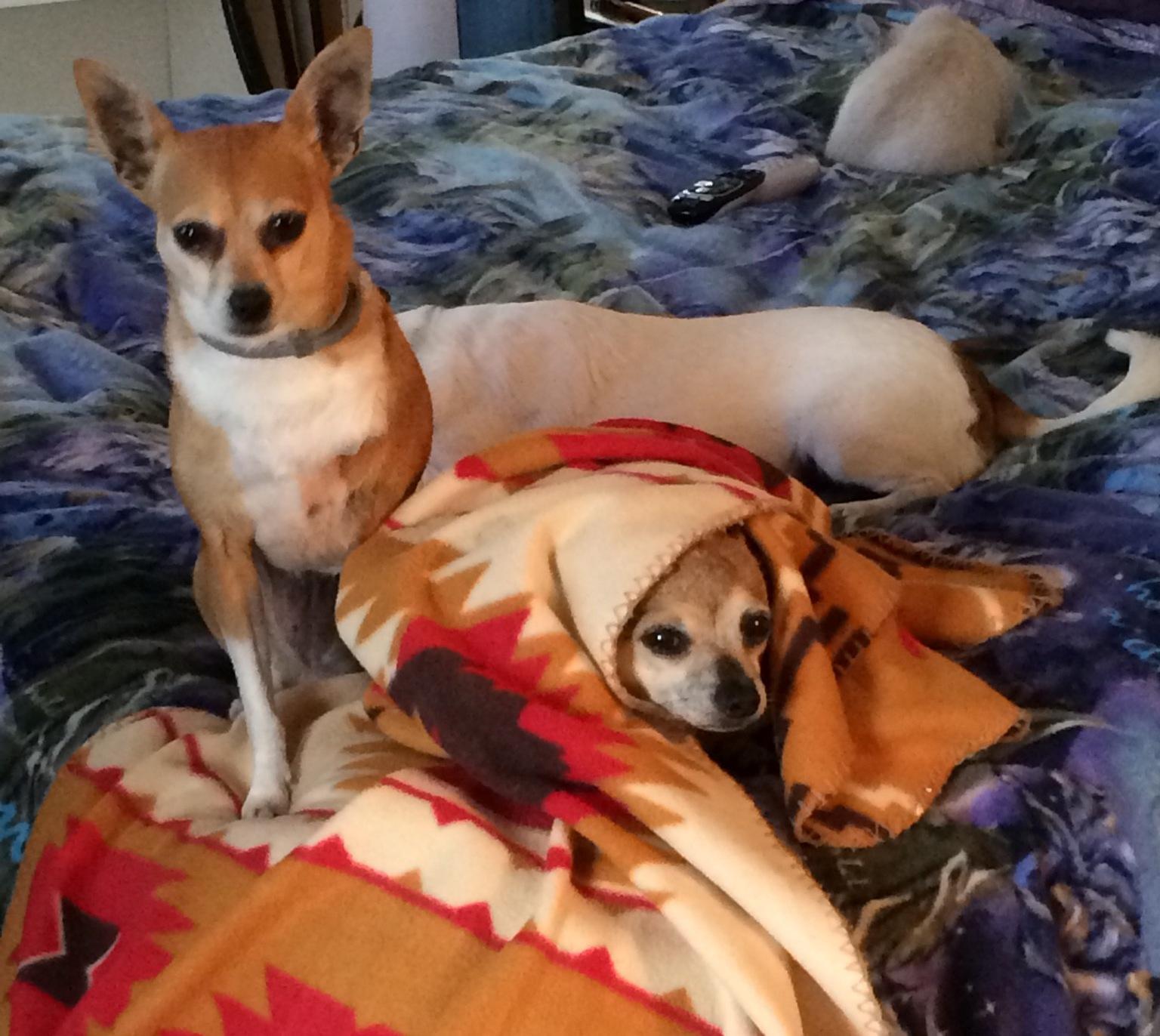 All Animals Veterinary Hospital Dickson Tn 37055 Yp Com