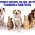 Veterinary Associates of South Florida and Spay and Neuter Foundation