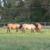 Wallace Quarter Horses