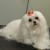 Scruggs Kennel Dog Grooming