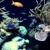 TerraReef Aquariums