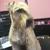 adorable animal designs salon and boutique