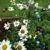 Pocket Gardens Landscape and Design