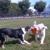 Dog Walking Do. - E Boston's Dog Walking & Pet Sitting Services