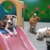 FREEPLAY DOGS Doggie DayCare, Cageless Dog Boarding, Indoor Dog Park, Cageless Dog Grooming