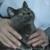 Suffolk Veterinary Group Animal Wellness & Laser Surgery Center