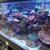 Creative Aquariums of Tampa