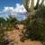 Tucson SnowBird Nest